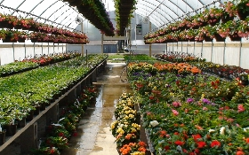 Telly's Greenhouse and Garden Center