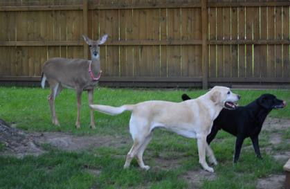 Lilly is pictured with her canine companions (Family photo)