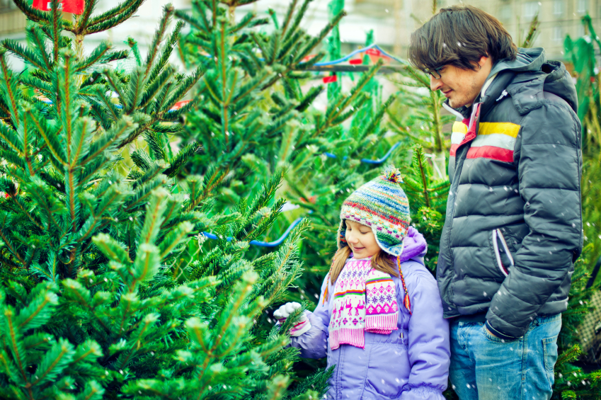 Best Christmas Tree Farms In Michigan