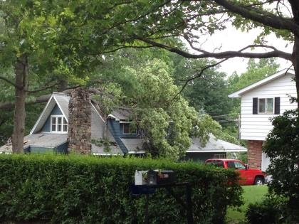 A tree is seen fallen onto a house in Waterford. (credit: Sandra McNeil/WWJ)