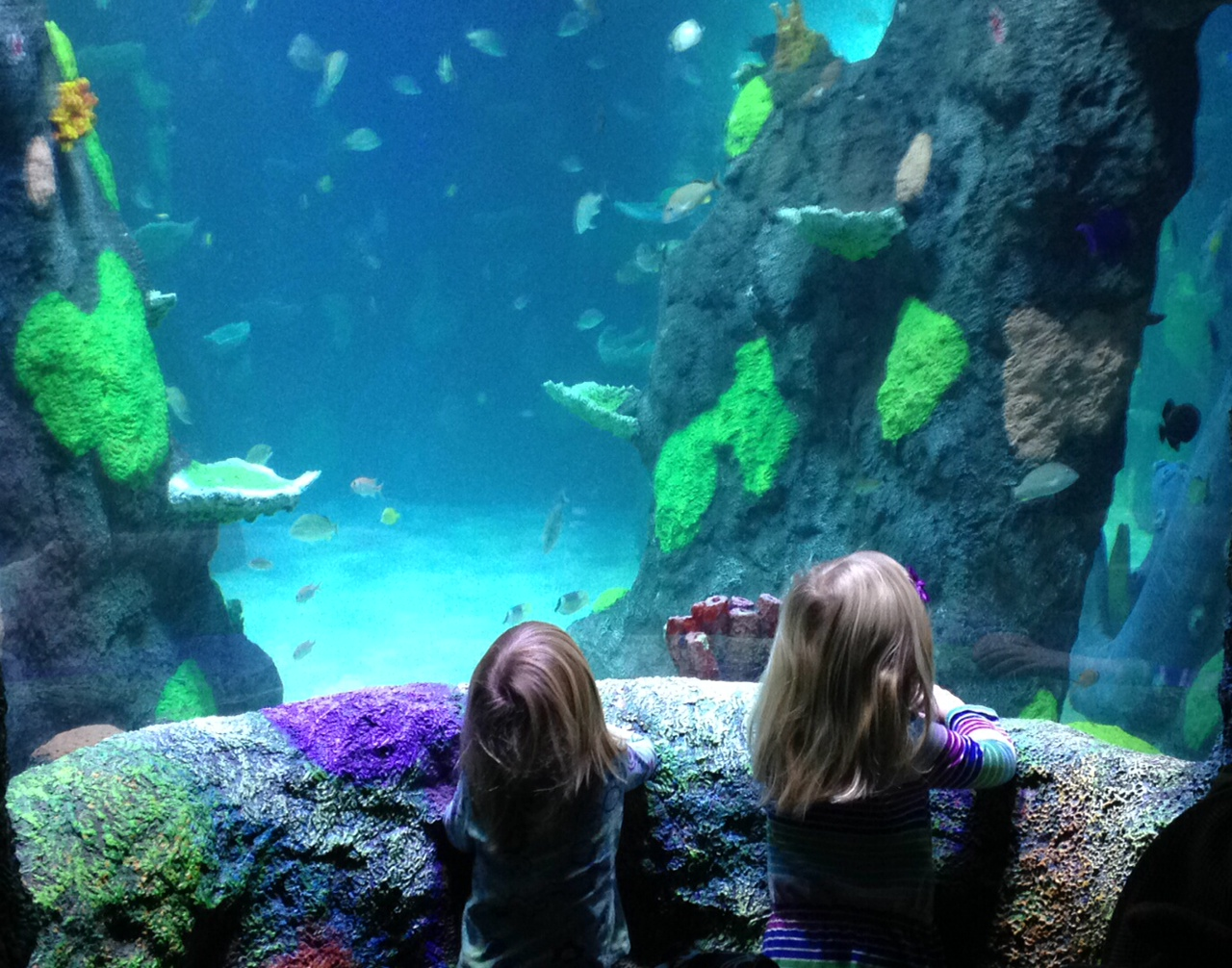 Aquarium Brings The 'SEA LIFE' To Great Lakes Crossing ...