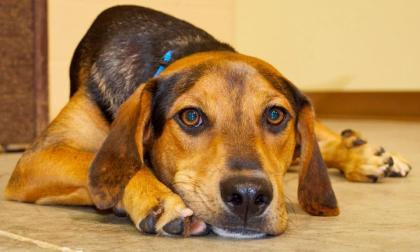(The Michigan Humane Society suggests that pets should live indoors, where it is cooler. Photo Credit: Michael Ferro)