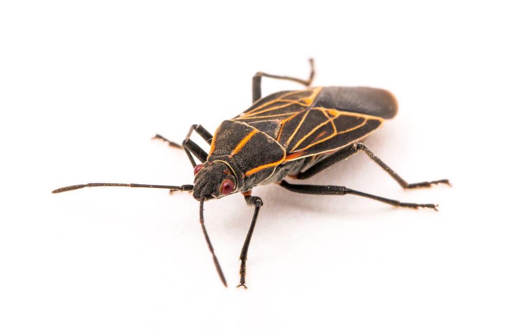 Report Stink Bugs 6 More Fall Invaders That Could Enter Your Home Cbs Detroit