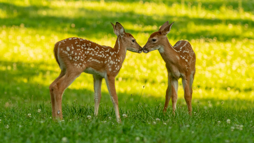 Orphaned Fawns Get New Lease On Life On Consumers Energy Land In Southeast Michigan
